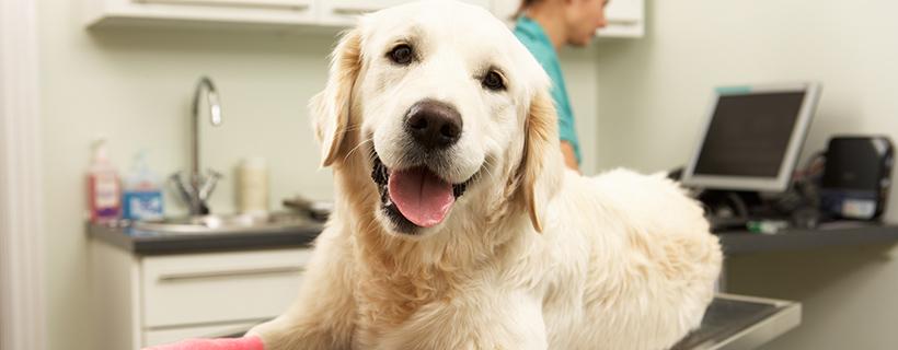 כלב בטיפול