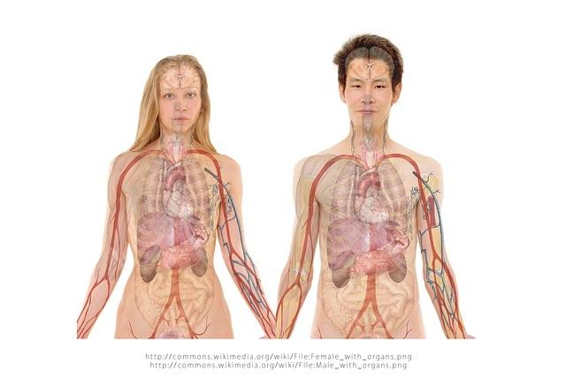 השתלות איברים